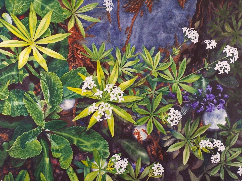 LauraBethmann_Four_Moons_in_the_Shade_Garden.Sweet_Woodruff_Watercolor_22x30