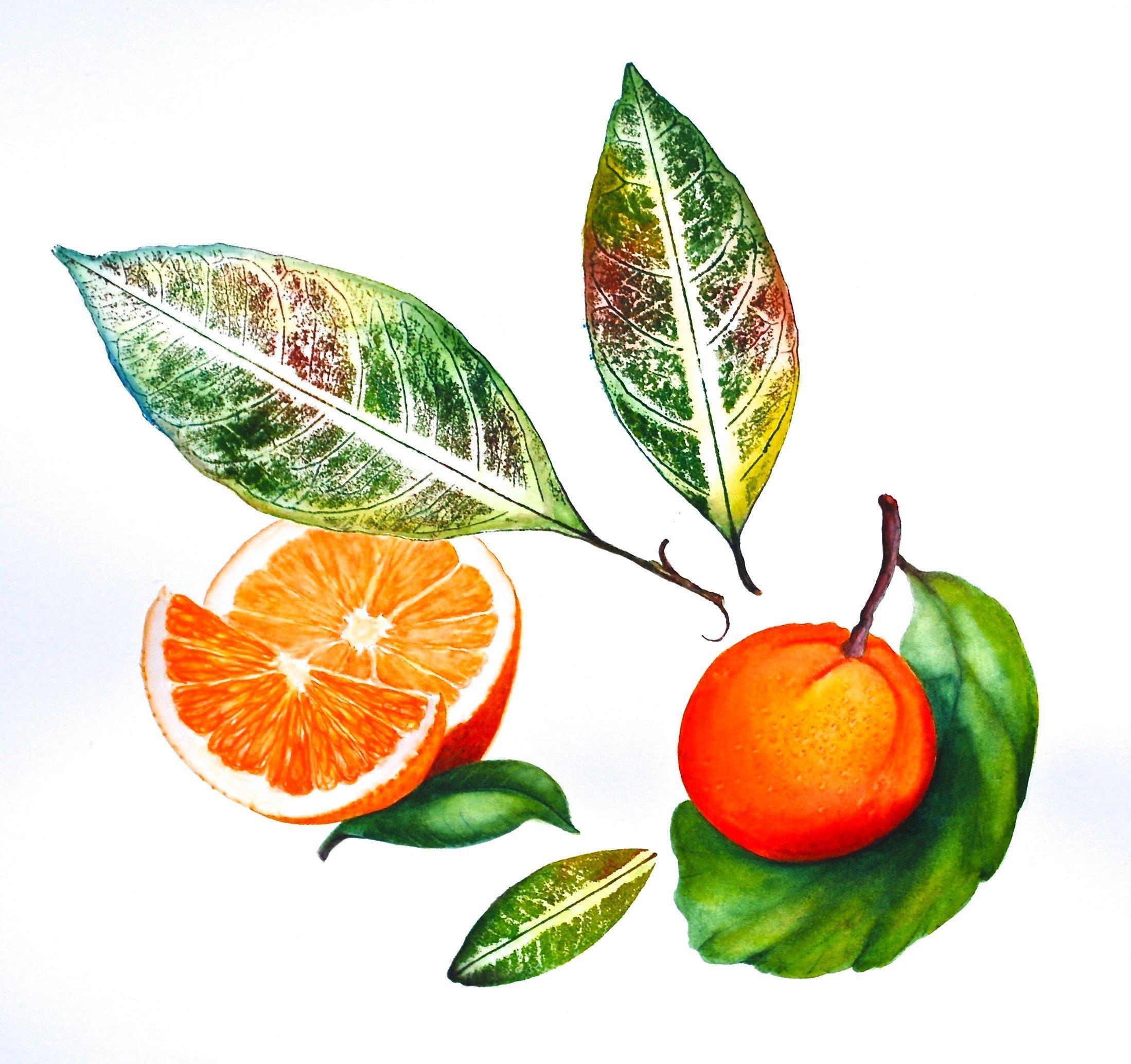"LauraBethmann_Orange_Ink_&_Watercolor_Nature_Print_Painting_10""x10"""