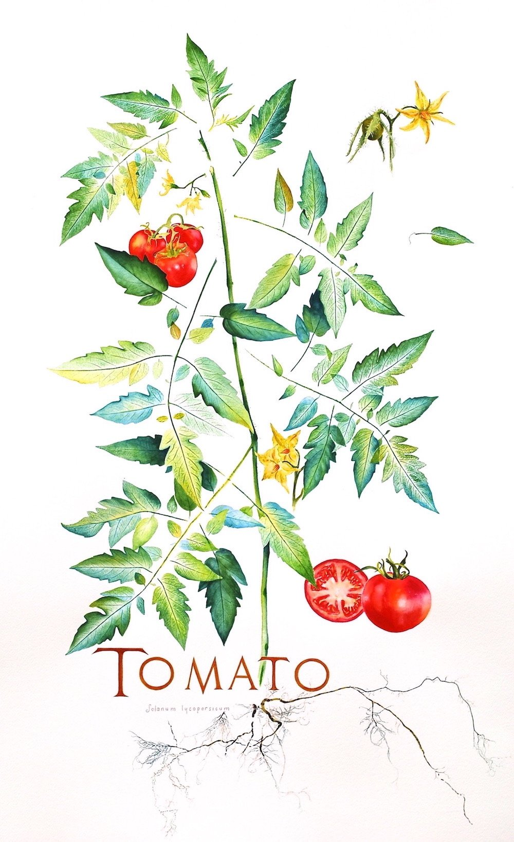 LauraBethmann_Tomato_Ink_&_Watercolor_Nature_Print_Painting_Hand_Lettering_36x22