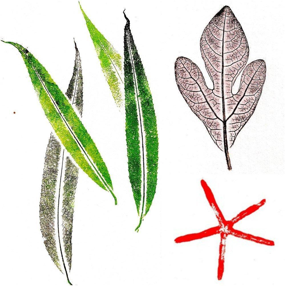 Nature prints Laura Bethmann