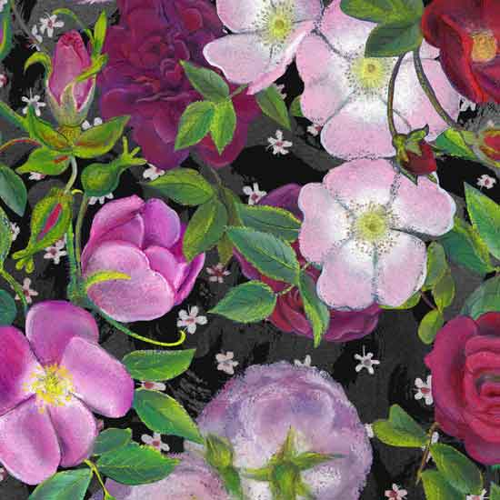 alisonmaccormaic-rose-on-roseforweb